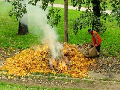 У Чернівцях інспекція благоустрою продовжує штрафувати за спалене сміття і листя