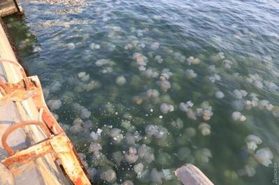 Одеський морвокзал потерпає від нашестя медуз