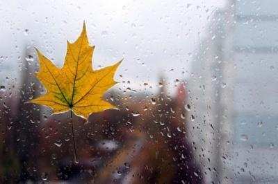 Негода на Буковині: синоптики попередили про значне посилення вітру в ніч на 26 жовтня