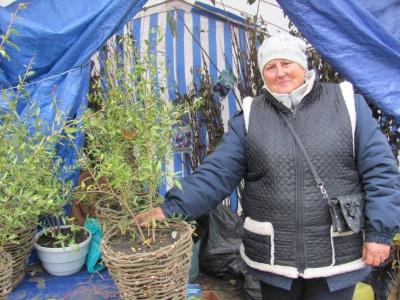 Гранат, мигдаль, «іудове дерево»: що можна придбати на виставці-ярмарку «Буковинська осінь»