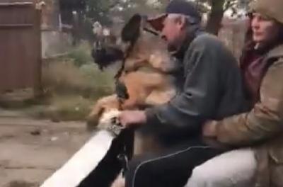 Мережу розсмішило кумедне відео із собакою на мопеді в Чернівцях