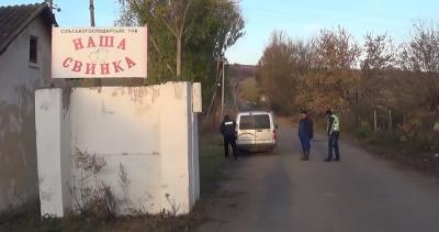 Спалах «африканки»: на Буковині спалили 148 голів свиней