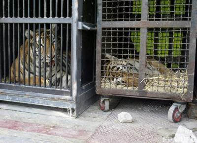 У Португалії заборонили виступи диких тварин в цирках