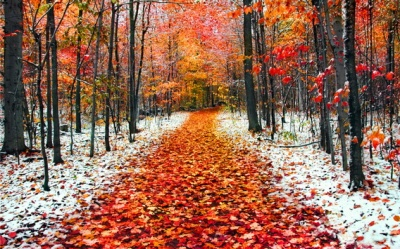 Якою буде погода у листопаді. Прогнози синоптиків
