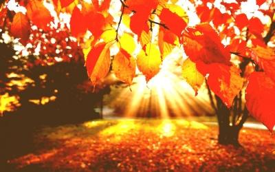 У жовтні на Буковині зафіксували два температурні рекорди