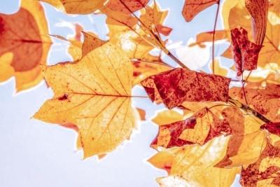 Згадувати минуле і сумувати: що не можна робити 4 листопада