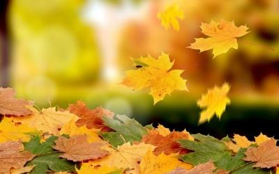 Ігнорувати обіцянки і приймати в дарунок квіти. Що не можна робити 9 листопада