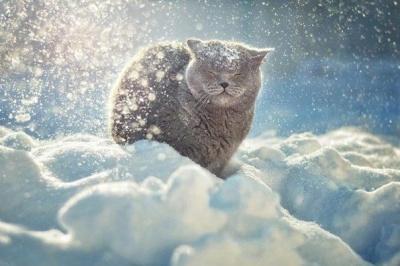 Сніг і морози до -25: народний синоптик розповів, коли українцям чекати справжньої зими