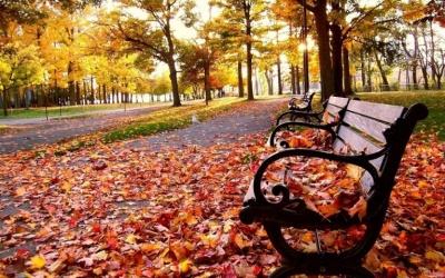 Говорити погані речі та звертатися за допомогою. Що не можна робити 12 листопада