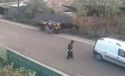 Мережу розсмішило відео безглуздої ДТП в Румунії з конем і п'яним чоловіком