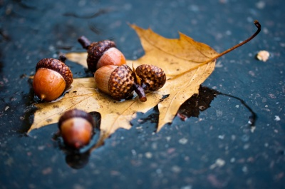 Їхати в далеку дорогу і з'ясовувати стосунки. Що не можна робити 15 листопада