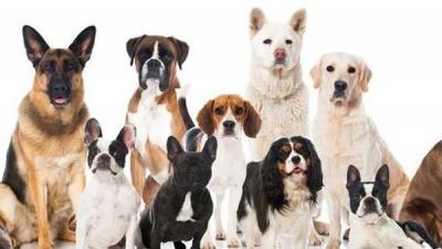 Що розповість про вашу особистість ваша улюблена порода собак