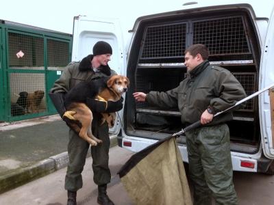 Чернівецька міськрада хоче дозволити цілодобовий вилов безпритульних собак