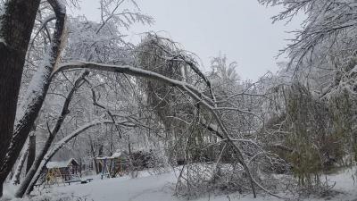 Наче зона стихійного лиха: на Буковині снігова негода повалила дерева й обірвала електролінії