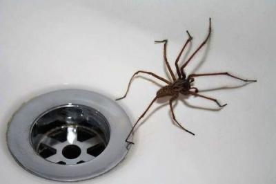 Чому не можна вбивати павуків у будинку