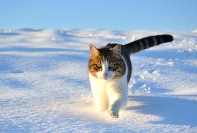 У Чернівцях рятувальники у мороз витягнули кішку з 5-метрового колодязя