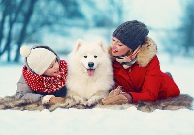 У Чернівцях до дня св. Миколая влаштують благодійну акцію «Любов тварин, яка лікує»