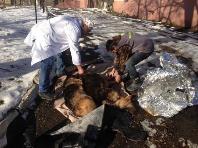 На Буковині патрульні врятували двох собак, яких збила автівка