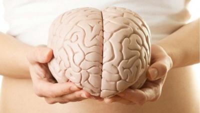 Як впливає розмір мозку на інтелект