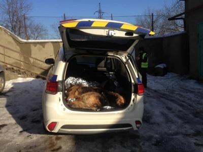 Помер собака, якого на Буковині врятували патрульні