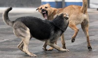 На Буковині безкоштовно будуть вакцинувати безпритульних собак