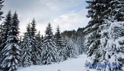 У Карпатах можливі снігові лавини - рятувальники