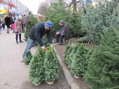 Де у Чернівцях продаватимуть новорічні ялинки: у мерії визначили перелік місць