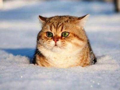 Лікарі розповіли, які хвороби передають коти
