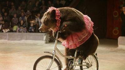 Мінприроди хоче заборонити диких тварин у цирках