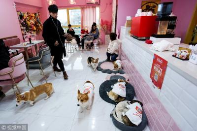 У Китаї собаки працюють офіціантами в кафе
