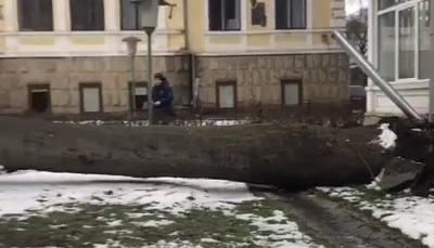 У центрі Чернівців на подвір'я гімназії впало велике дерево - відео