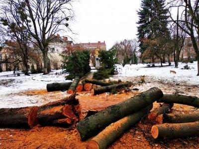 Закривали бюст Воробкевича: у сквері біля ЧНУ порубали ялинки