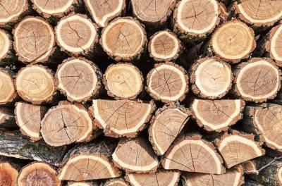 В Україні почали діяти нові стандарти якості деревини