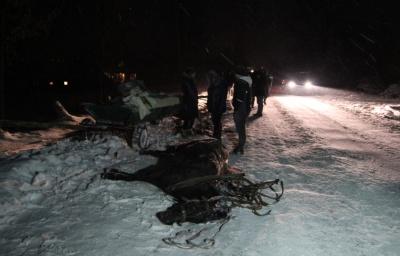 У Сторожинці легковик на ожеледиці зіткнувся з гужовим возом, загинув кінь - фото