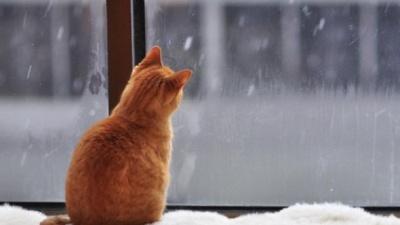 В Україні на початку тижня очікується потепління і опади