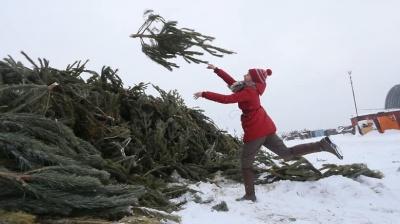 Куди здати новорічну ялинку: назвали адреси утилізації в Чернівцях