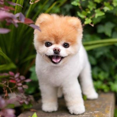 """Помер """"наймиліший собака"""" у світі - фото"""