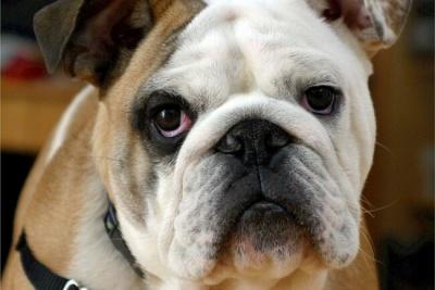 Жінка ризикнула життям заради порятунку чужого собаки