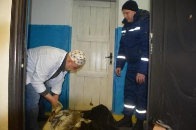 У Чернівцях співробітники ДСНС врятували пораненого лебедя - відео