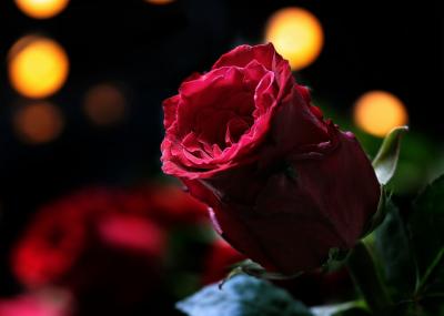 Що подарувати жінці на 14 лютого: підказки за знаком Зодіаку