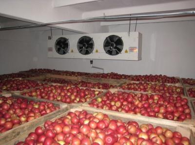 Рекордні цифри: у фруктосховищах України зберігається 280 тисяч тонн яблук