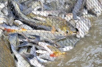 На Буковині двох рибалок оштрафували на велику суму через заборонені знаряддя