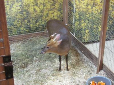 У Чернівцях відкрили екзотичну виставку з африканськими равликами та карликовими оленями