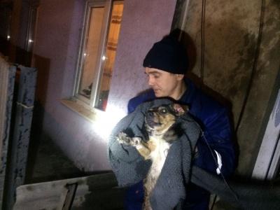 У Чернівцях співробітники ДСНС врятували із палаючого будинку двох собак - фото