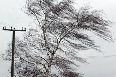 На Буковині рятувальники попередили про пориви вітру