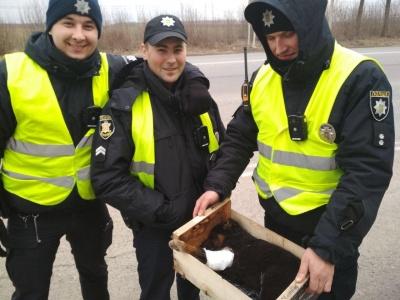 На Буковині патрульні врятували цуценя, яке збила автівка - фото