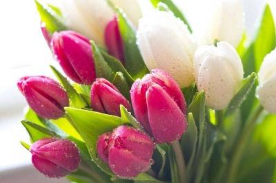 8 березня: найкращі привітання у віршах і прозі