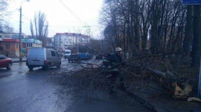 У Вінниці через падіння дерева загинула 12-річна дівчинка