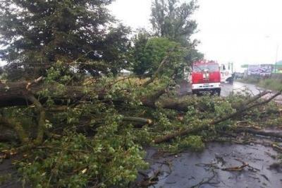 На Вінниччині через падіння дерева загинула жінка