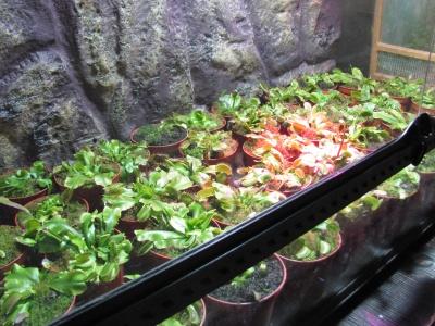 Рослини-хижаки та жителі джунглів: у Чернівцях відкрили екзотичну виставку – фото